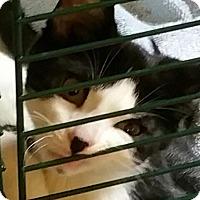 Adopt A Pet :: Ricky - Ortonville, MI