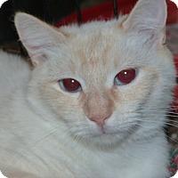 Adopt A Pet :: Sasha - Stafford, VA