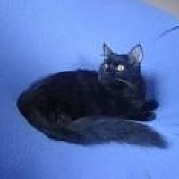 Adopt A Pet :: Emmett - Sarasota, FL