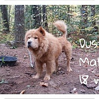 Adopt A Pet :: DUSTY - Dix Hills, NY