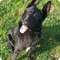 Adopt A Pet :: Shadow - Lincolnton, NC