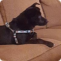 Adopt A Pet :: zeus - North Brunswick, NJ