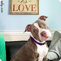Adopt A Pet :: Avery - Worcester, MA