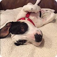 Adopt A Pet :: Carnie Wilson - Jersey City, NJ