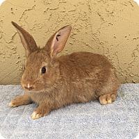 Adopt A Pet :: Sochi - Bonita, CA