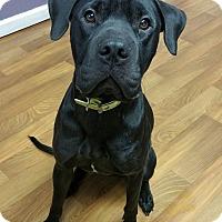 Adopt A Pet :: Ellie - Lisbon, OH