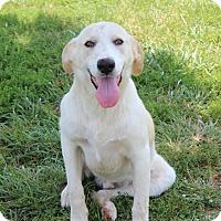 Adopt A Pet :: Josh - Harmony, Glocester, RI