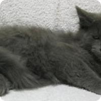 Adopt A Pet :: smokey - Gary, IN
