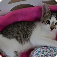 Adopt A Pet :: Joey - Greenwood, SC