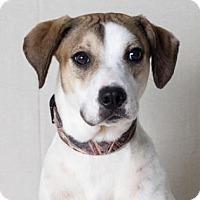 Adopt A Pet :: Lou - Tulsa, OK