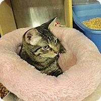 Adopt A Pet :: Ramona - Colmar, PA