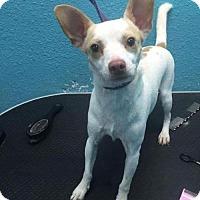Adopt A Pet :: Rio - Matawan, NJ