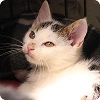 Adopt A Pet :: Flynn - Middletown, CT