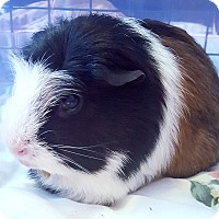 Adopt A Pet :: Lupita - St. Paul, MN