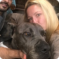 Adopt A Pet :: Blossom - Beverly Hills, CA
