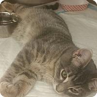 Adopt A Pet :: Oshie - Gainesville, FL