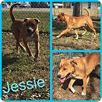 Adopt A Pet :: Jessie - Alvarado, TX