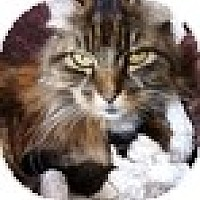 Adopt A Pet :: Morrow - Vancouver, BC