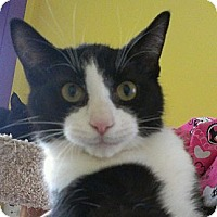 Adopt A Pet :: Wayne Simmonds - Richboro, PA