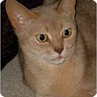 Adopt A Pet :: Chanee - Davis, CA