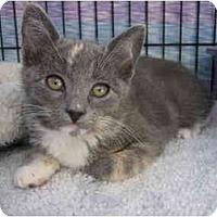Adopt A Pet :: Taffy - Irvine, CA
