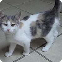 Adopt A Pet :: Taelyn - Byron Center, MI