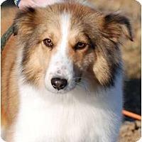Adopt A Pet :: Bentley - Providence, RI