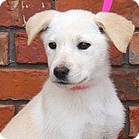 Adopt A Pet :: *Kennedy - PENDING - Westport, CT