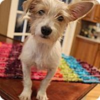 Adopt A Pet :: Pez - Wytheville, VA