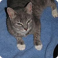 Adopt A Pet :: Alexa - Binghamton, NY