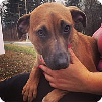 Adopt A Pet :: Louise - Pompton Lakes, NJ