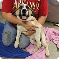 Adopt A Pet :: Lucious - Brattleboro, VT