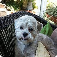 Adopt A Pet :: TITUS - San Diego, CA