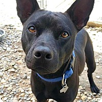Adopt A Pet :: Apolo - Freeport, ME