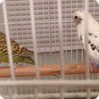 Adopt A Pet :: Sparkle & Bluey - Chicago, IL