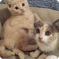 Adopt A Pet :: Dasani - Nashville, TN