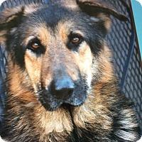 Adopt A Pet :: CHARLIE VON COLE - Los Angeles, CA