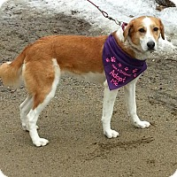 Adopt A Pet :: Jasmine in NH(FREE) - Ascutney, VT