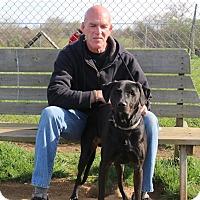 Adopt A Pet :: Augie - Elyria, OH