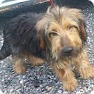 Adopt A Pet :: Trey
