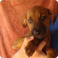 Adopt A Pet :: Micky - Oviedo, FL