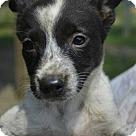 Adopt A Pet :: Elisa