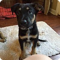 Adopt A Pet :: Flynn - Morrisville, NC