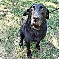 Adopt A Pet :: Frodo - Fredericksburg, VA