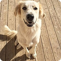 Adopt A Pet :: Zephyr (FORT COLLINS) - Fort Collins, CO