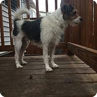 Adopt A Pet :: Tex - norridge, IL