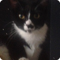 Adopt A Pet :: Rhea - Trevose, PA