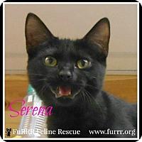 Adopt A Pet :: Serena - Gonic, NH