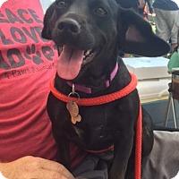 Adopt A Pet :: Sarah - Hayes, VA