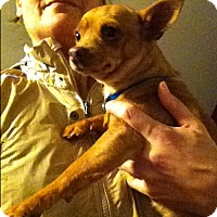 Adopt A Pet :: Catalina - Boerne, TX